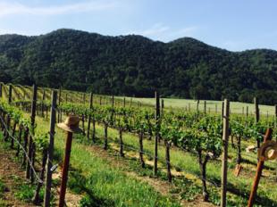 Jack Creek Vineyards Jack Creek Cellars Shows Why Wine Clubs Are Good
