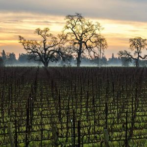 Wow Wine Country Dawn Balletto Vineyards Has Great Wine and an All-American Success Story