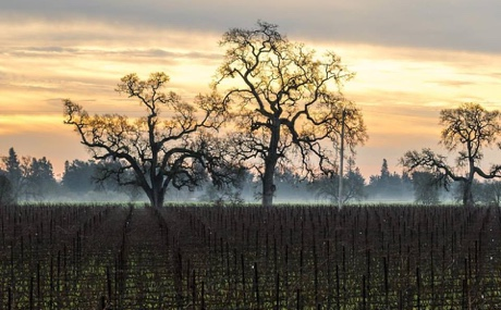 Wow Wine Country Dawn Featured Balletto Vineyards Has Great Wine and an All-American Success Story